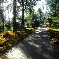 Осенняя аллея в парке :: Ольга Кривых
