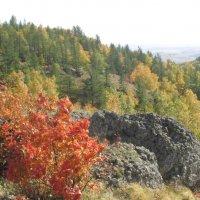 Разноцветная осень :: Dana