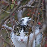 киска на дереве :: Натали Акшинцева