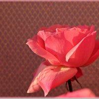Нежность и красота :: Лидия (naum.lidiya)