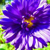 Цветы у храма. :: Татьяна ❧