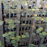 НЕскучный сад :: Alexander Varykhanov
