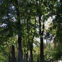 Осень в парке Владимирская горка :: Владимир Бровко