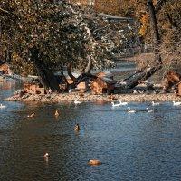 Осень в зоопарке :: Евгеша Сафронова
