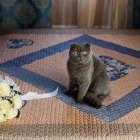 Добрый котик :: Ирина Матюхина