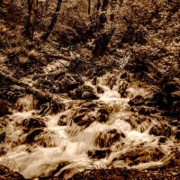 вода, вода... кругом вода... :: Svetlana AS