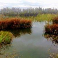 осеннее озеро :: Александр Прокудин