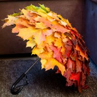 Осенний зонтик. :: Инта