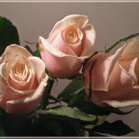 Кремовые розы :: Эля Юрасова
