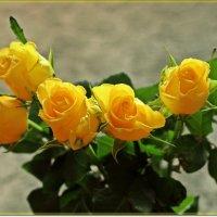 Дурманящий запах роз :: Лидия (naum.lidiya)
