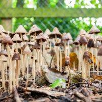 Magic mushrooms :: Asinka Photography