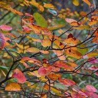Осенние художества... :: марк