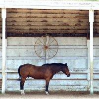 Лошадь :: Julia Vito