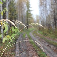 дорога к избушке :: Тыртышных Светлана