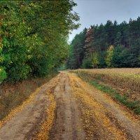 желтеют листья...осень... :: юрий иванов