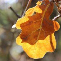Осень.... :: Ирина Королева