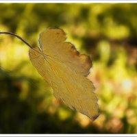 Осенние мотивы :: Любовь Чунарёва