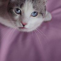 Печальный котик :: Анна Шелест