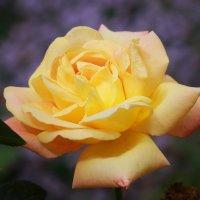 Цветок :: Рустам Шорахимов
