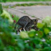 Застал кота за преступлением... :: Анатолий Клепешнёв