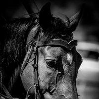 Конь :: Евгений Синяткин