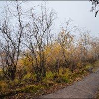 Осень. :: Николай Емелин
