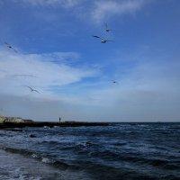 Чайки с криком ко мне летят... и как чайке мне море снится... :: Людмила