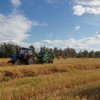 По полю трактор стрекотал... :: Юрий Кольцов