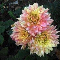 Сентябрь в саду :: muh5257
