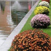 Осенние цветы. :: Ольга