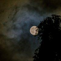 А из нашего окна луна полная видна :: Ольга Осипова