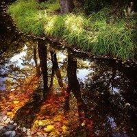 В листьях :: Ilona An
