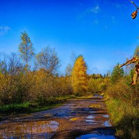 Осенние прогулки. :: Любовь Чунарёва