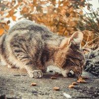 cat :: Kristina Usanova