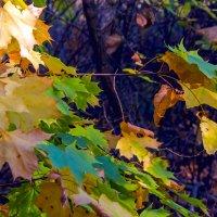 Осенние листья :: Юрий Стародубцев