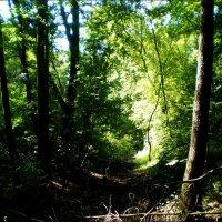 В лесу :: Татьяна Пальчикова
