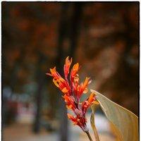 Осенние цветы. :: Александр Гавриленко
