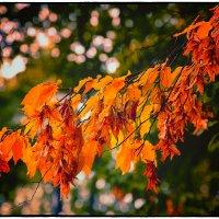 Осень. :: Александр Гавриленко