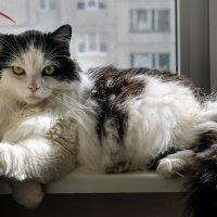 Кот ученый))) :: Виктор