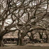 Причудливые старые деревья в Ангкоре. :: Владимир Чернышев