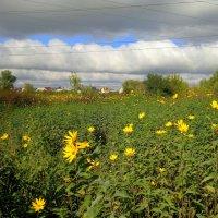 сентябрьские цветы :: Александр Прокудин