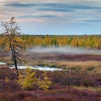 Туман на опушке леса :: Ирина Токарева