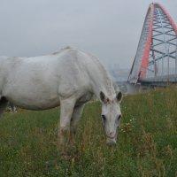 Белая косичка :: Андрей Ягодко