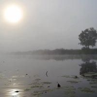Утро туманное :: Таня Аверина