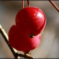 плоды осени :: victor leinonen