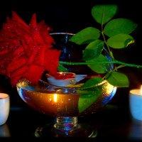 Ах эти розы, они как грезы ..... :: Людмила Богданова (Скачко)
