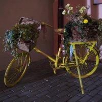 цветник на колесах :: Константин Бабкин