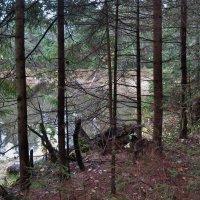 Осенний лес :: VADIM *****