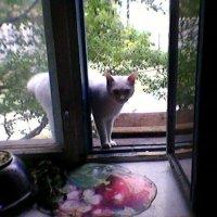 Кот! :: Миша Любчик