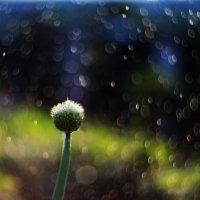 Про лук порей, который любил мечтать под дождём...) :: Светлана Карнаух